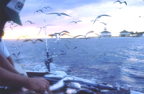 view of lighthouse from fishing boat with many seagulls in the sky